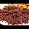 Gâteau de semoule au chocolat / Basboussa au chocolat